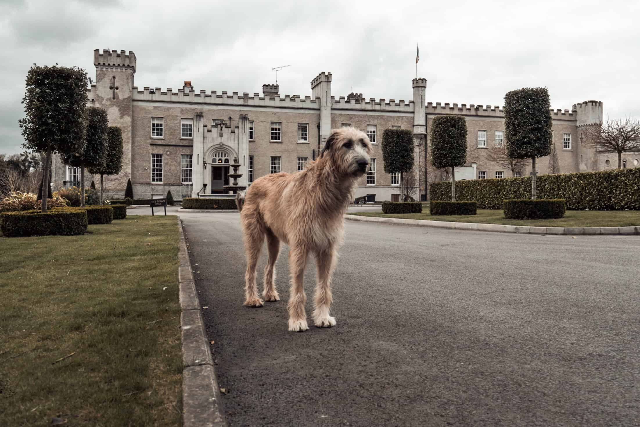 Bellingham Castle Weddings